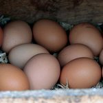Farm Fresh Organic Eggs can be purchased at our Market