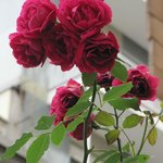 Foto de Bed and Bread