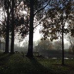 a misty morning at the park simply stunning