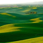 Palouse Tour