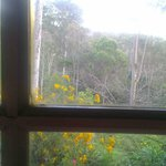 Foto de Bellbird Cottage B&B
