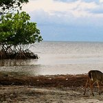 deer wandering in the morning on the beach