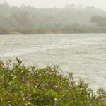 Down current area of island in the Niger River behind the hotel; hippos in the water