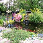 Koi pond & waterfall in backyard