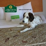 ภาพถ่ายของ La Quinta Inn & Suites Norfolk Airport