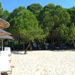 Koukounaries beach: sea, sand, pine forest