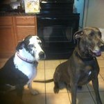 Zowie and our foster Duke on the right