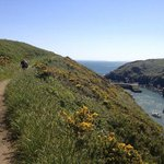The coastal path at St Davids