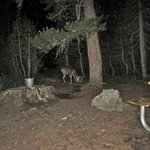 Photo de White Wolf Campground