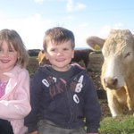 Our daily chat with the cows at Trevalgan Farm