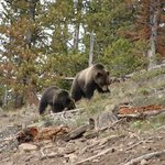 Yellowstone Wildlife and Photo Tours