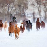 The beauty of winter with horses