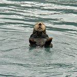Alaska Saltwater Lodge & Tours
