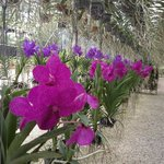 One of the greenhouses at RF Orchids