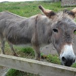 Bumble the donkey