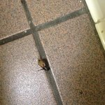 roach in bath room