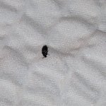 Bug on Bed