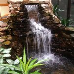Waterfall in the atrium with real fishies.