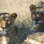 Serondella Game Lodge resmi