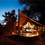 Rhino Walking Safaris At Plains Camp