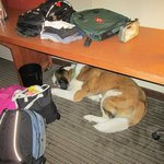 Desk-counter thing.  Large enough for a St. Bernard to sleep under!