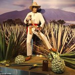 Photo of Museo Sensorial del Tequila