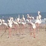 Flamingos on the beach.