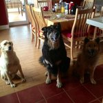 Josee's dogs - MoMo, Stanley, and Braisey (I think)