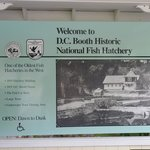 Great Fish Hatchery!