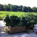 Geoffery and rosemary have been hard at work to offer more homegrown ingredients at Arch House
