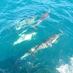 the dolphins who accompanied us