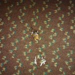 Third Cockroach I killed at the Rodeway Inn in El Centro... PROOF I AM NOT LYING!