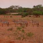 East Africa Adventure - Day Tours