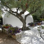 The bungalows are located in an olive grove