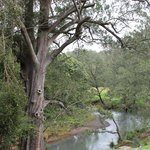 The creek, looking upstream from the veranda