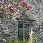 View of window and climbing rose