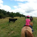 Riding among the cattle
