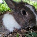 Traquillo, The resident bunny! She is super awesome and is the biggest attention hog!
