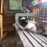A leasure morning with Forest (18-yrs old!) on the front porch.