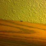 Bug on the headboard