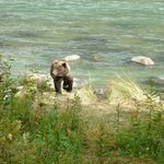Local salmon fishing spot with great safe bear watching - host gave super safety & fishing tips!