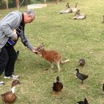 Feeding wallaby at Oakhill Farm
