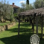 Fabulous mature olive grove surrounding the house and adjacent to the lovely pool