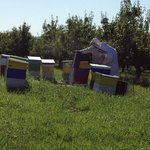 Working with the bee hives with Farmer John