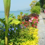 Flower displays along lake Geneva