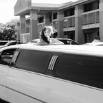 You can see the front of the hotel behind the limo. (Photo Copyright/Taken by Christy at Cheapsh