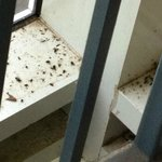 Flies in the stairwell
