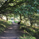 Jubilee Path National Trust for Scotland