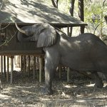 Φωτογραφία: Little Kwara Camp - Kwando Safaris