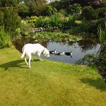Sasha checking out life on the duck pond